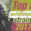 Top 5 de variedades autoflorecientes de 2017