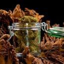 Guía de secado y curado de flores de marihuana