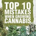 Top 10 de Errores en el Cultivo de Cannabis y Cómo Evitarlos