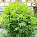 Cómo prevenir que tus plantas de interior crezcan demasiado