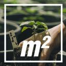 ¿Cuántas plantas de cannabis por metro cuadrado?