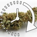 Cómo secar rápidamente tus cogollos de cannabis frescos