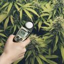 Incrementa tus cosechas con un luxómetro