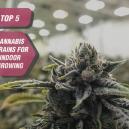 Las 5 mejores variedades de cannabis para cultivar en interior