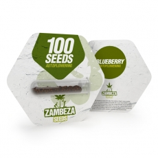 Semillas Blueberry Autofloreciente a granel