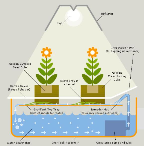 El cultivo de marihuana hidróponica