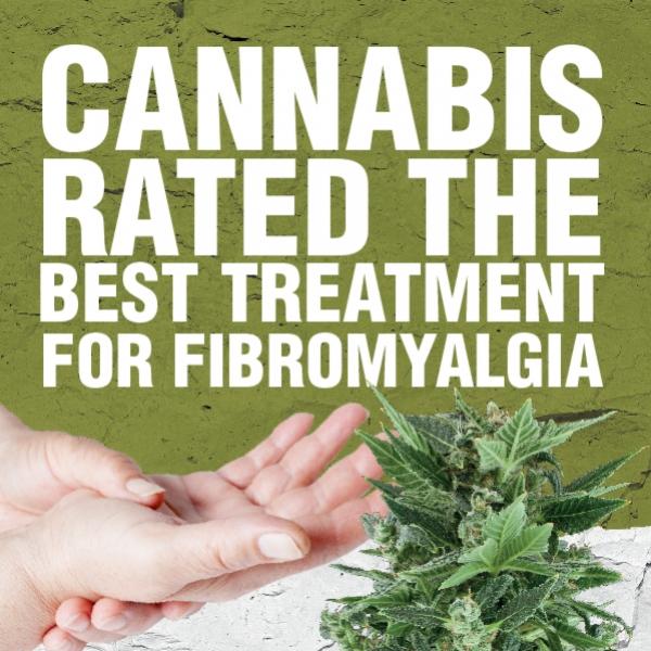 El Cannabis Calificado como el Mejor Tratamiento para la Fibromialgia
