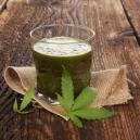 Beneficios de exprimir cannabis fresco