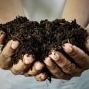 Fertilizante casero ecológico: ¿cómo se hace?