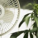 La importancia de la circulación de aire para el cultivo de