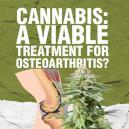 Cannabis: ¿Un Tratamiento Viable para la Osteoartritis?