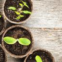¿Hay más especies de plantas que produzcan cannabinoides?