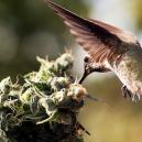 Cómo evitar que las aves se acerquen a tus plantas de cannab