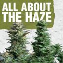 Todo sobre la Haze