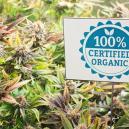 Control ecológico de plagas para plantas de marihuana