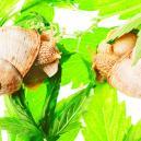 Top 10 de razones por las que tu planta de marihuana crece d
