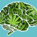 ¿Cómo afecta el cannabis a tu cerebro?