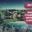 Las mejores cepas índica para climas fríos