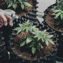 Eelgir la maceta más adecuada para tus plantas de marihuana