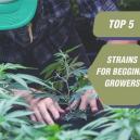 Las 5 mejores variedades para cultivadores principiantes