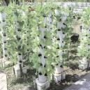 ¿Qué es el cultivo vertical y cómo aumenta la producción?
