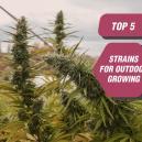Las 5 mejores variedades para el cultivo en exterior