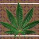 ¿Qué son las hojas de cannabis en forma de abanico?