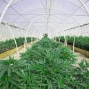 Cultiva hierba fácilmente construyendo un invernadero