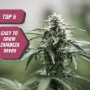 Las 5 semillas más fáciles de cultivar de Zambeza