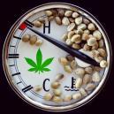 El intervalo de temperatura ideal para cultivar marihuana