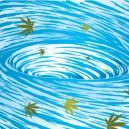 Lavado de las plantas de cannabis