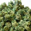 Técnica del Super Cropping en el cultivo de marihuana